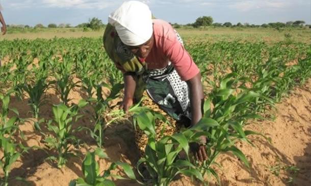 Lutter contre la sécheresse et renforcer la résilience des communautés au Sahel